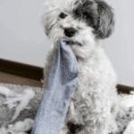 HOW TO REPAIR CARPET DAMAGE BY PETS – Repaireshub